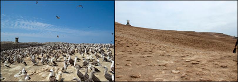 Vista de la isla Guañape Sur (La Libertad): Foto Izquierda tomada la quincena de Diciembre 2013 y foto de la derecha tomada la quincena de junio 2014