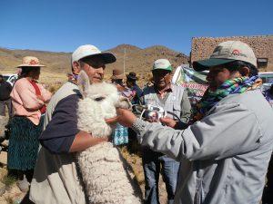 Sanidad animal puno for Viveros en lampa