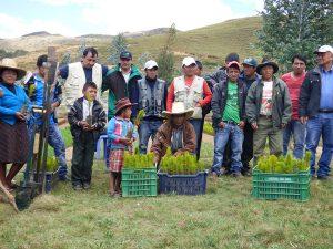 plantaciones_forestales2